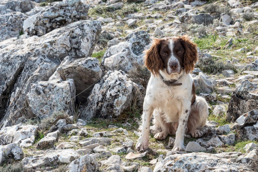Chester, our Springer Spaniel, posing for a photo on the way up.