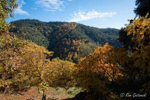 Wonderful colours of autumn