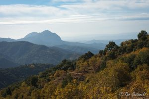 Autumn colour and a misty view of the Sierra Bermeja in late November