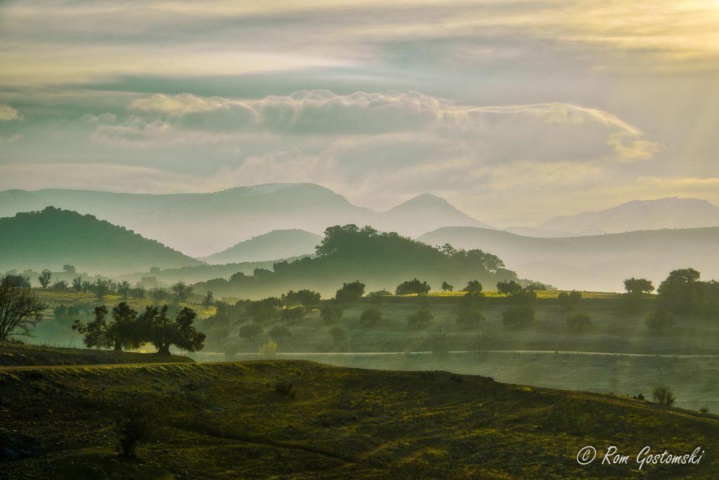 Misty morning - olive groves