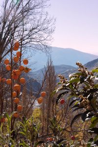 The Poqueira valley viewed from Bubión with persimmons growing in the foreground.