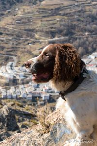 Our Springer Spaniel, Chester admires the view. That's Trevélez in the background